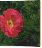 Brilliant Icelandic Poppy Wood Print