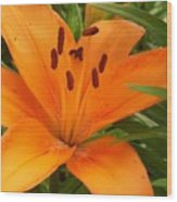 Brilliant Orange Lilly Wood Print