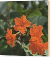 Brilliant Orange Tropical Flower Wood Print