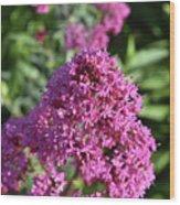 Brilliant Pink Blooming Phlox Flowers In A Garden Wood Print
