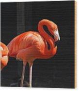 Brilliant Pink Flamingo Wood Print
