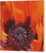 Brilliant Poppy Wood Print