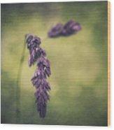 Brin D'herbe Wood Print
