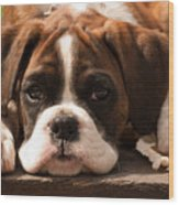 Brindle Boxer Pup Wood Print