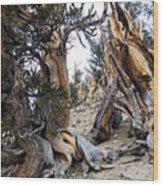 Bristlecone Forest, Ca November 2105 Wood Print