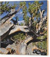 Bristlecone Great Basin Landscape Wood Print