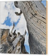 Bristlecone Great Basin Portrait Wood Print