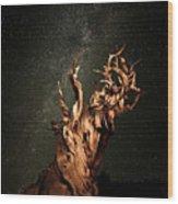 Bristlecone Nights Wood Print