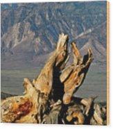 Bristlecone Pine Down Wood Print