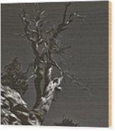 Bristlecone Pine In Black And White Wood Print