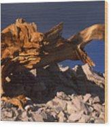 Bristlecone Pine - White Mountains Wood Print