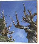 Bristlecone Trees Wood Print