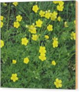Bristly Buttercup Wood Print