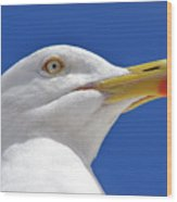 British Herring Gull Wood Print