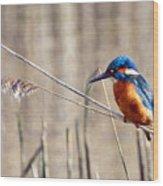 British Kingfisher Wood Print