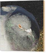 British Pigeon Wood Print