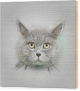 British Shorthair Cat Wood Print
