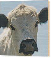 British White Cow Wood Print