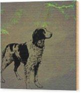 Brittany Spaniel Wood Print