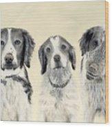 Brittanys  Wood Print
