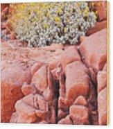 Brittlebush Bloom Wood Print