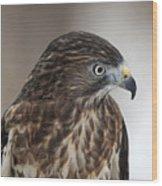 Broad-winged Hawk Wood Print