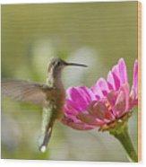 Broadbilled Hummingbird Wood Print
