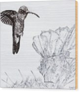 Broadbilled Hummingbird Wood Print