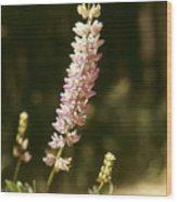Broadleaf Lupine Wood Print