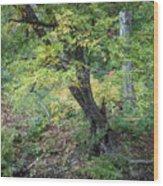 Broken Branches Wood Print