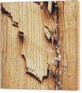 Broken Old Stump Spruce Wood Print