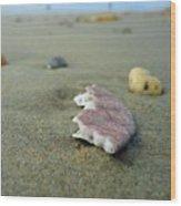 Broken Sand Dollar - Low Tide At Manhattan Beach Wood Print