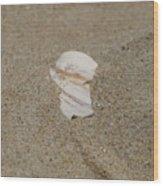 Broken Shell Wood Print
