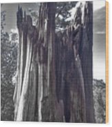 Broken Tree Wood Print