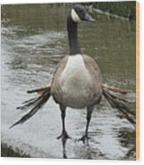 Broken Winded Goose On Lower Weir Wood Print