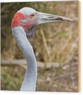Brolga Profile Wood Print