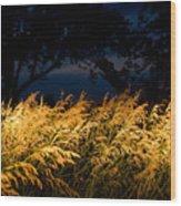 Brome Grass In A Field Near Princeton Wood Print