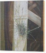 Bromeliad And Bamboo Wood Print