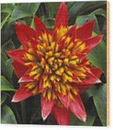 Bromeliad Blooming Wood Print