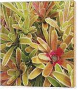 Bromeliad Brightness Wood Print by Ron Dahlquist - Printscapes