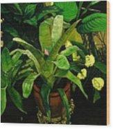 Bromeliad Wood Print by Doug Strickland