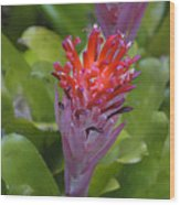 Bromeliad Flower Wood Print