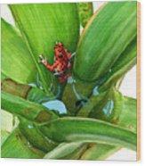Bromeliad Microhabitat Wood Print by Logan Parsons