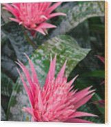 Bromeliad Plant 3 Wood Print