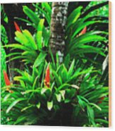 Bromeliads El Yunque National Forest Wood Print