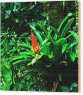 Bromeliads El Yunque  Wood Print by Thomas R Fletcher