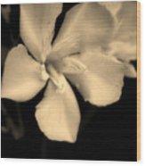 Bronze Frost White Flower Wood Print