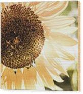 Bronze Sunflower Wood Print