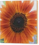 Bronze Sunflower No 2 Wood Print