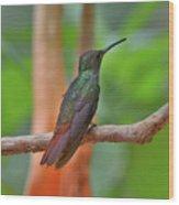 Bronze-tailed Plumeleteer Wood Print